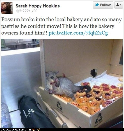 bakeries,bakery,best of the week,donuts,food,omg,opossum,overdose,overeating,possums,sweets,twitter