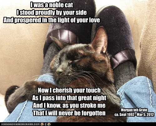 I was a noble cat I stood proudly by your side And prospered in the light of your love