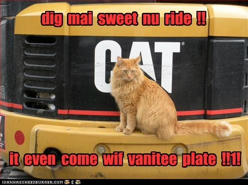 brand,cat,dig,license plate,new,plate,ride,sweet,tabby,vanity,vehicle
