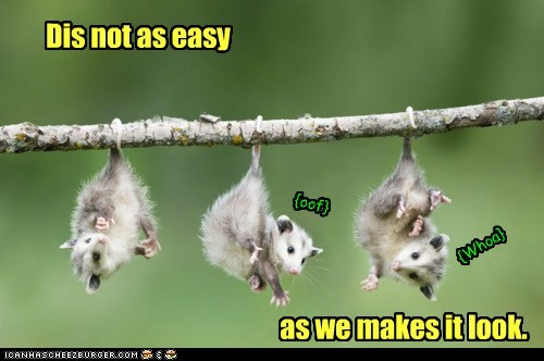 Dangling Possums