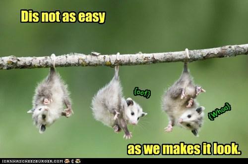 Dangling Possums