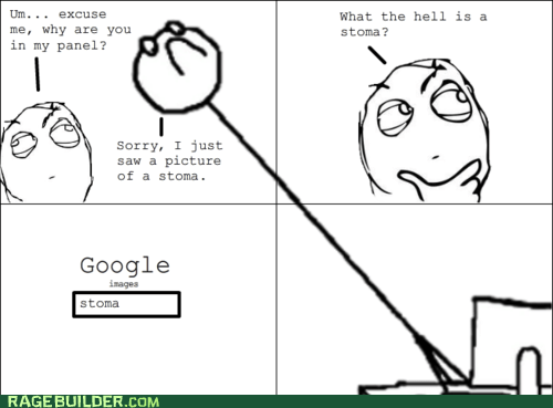 4th wall,best of week,google,Rage Comics,stoma