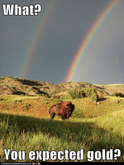 america,bison,buffalo,field,luck,rainbow