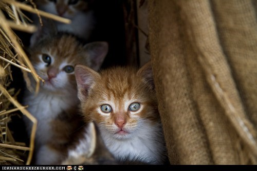 Cyoot Kittehs of teh Day: Hay Babies