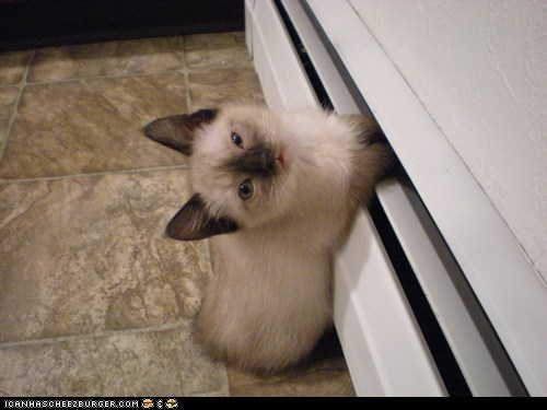 Cyoot Kitteh of teh Day: Me Pawz R Cold!