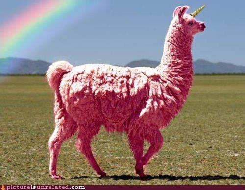 best of week,llama,rainbow,unicorn,wtf