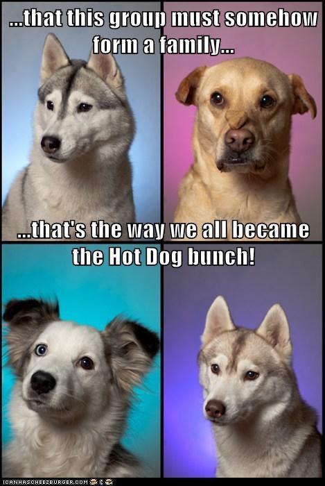 australian shepherd,dogs,funny,husky,mixed breed,treat