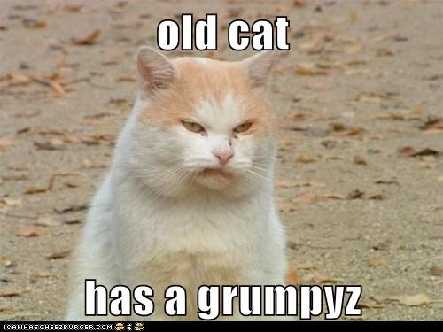 old cat  has a grumpyz