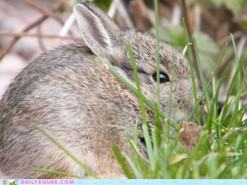 Benjamin,bunny,rabbit,reader squees,saved