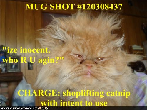 "MUG SHOT #120308437 ""ize inocent.                                        who R U agin?"" CHARGE: shoplifting catnip                with intent to use"