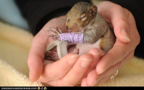 Adorable Little Squirrel With a Purple Cast