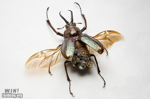 Steampunk Insects WIN