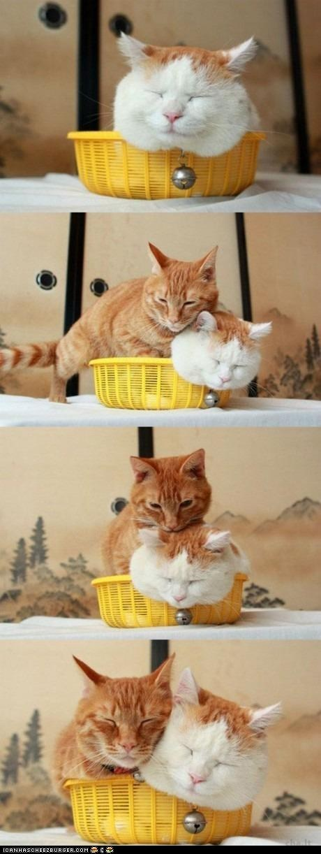 basket,baskets,best of the week,lol,rude,shiro,squeeze,tight squeeze,two cats