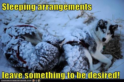 dog sled,iditarod,mush,race,sled dog,update