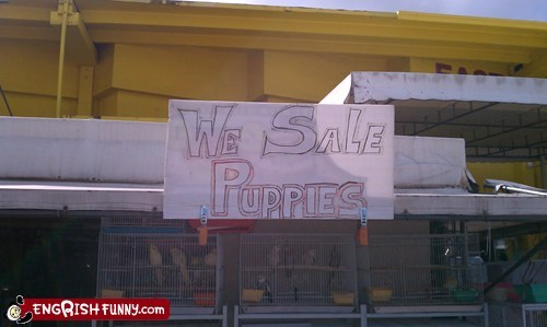 dogs,engrish,puppies,puppy,sale,sign