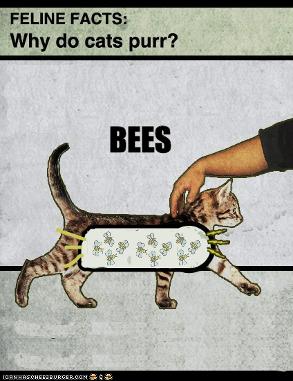 bees,Cats,Fake Science,purr,purring,science,why