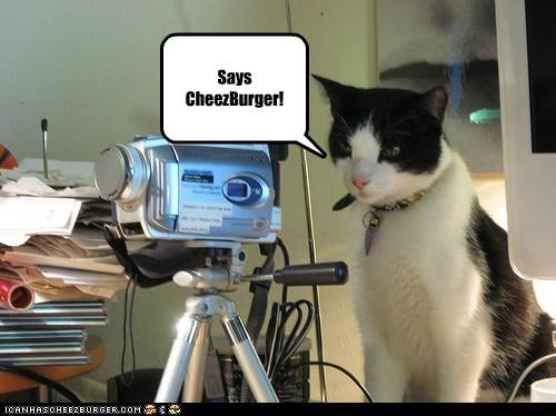 Cheezburger kitty