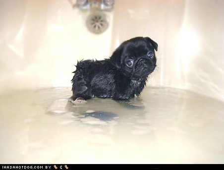 Cyoot Puppy ob teh Day: Baff Timez!