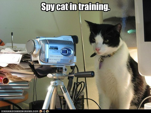 Spy cat in training.
