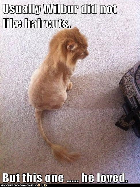 Usually Wilbur did not like haircuts.  But this one ..... he loved.