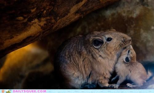 baby,mom,rock,rodents,snuggle,whatsit wednesday