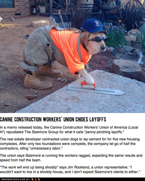 Canine Construction Workers' Union Chides Layoffs