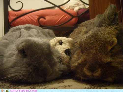 bunnies,Plushie,reader squees,sleepy