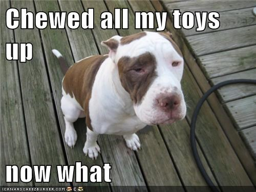 Chewed all my toys up