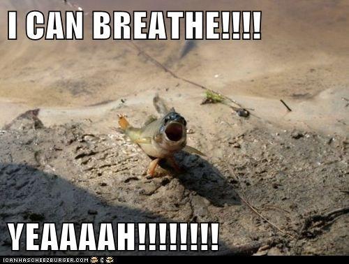 air,breath,fish,land,water,yay,yeah