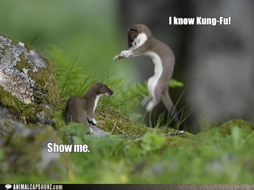 Stoat Keanu Knows Kung-Fu