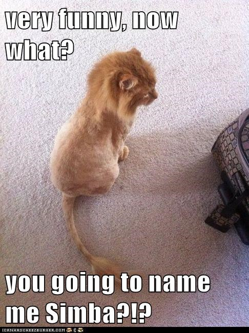 very funny, now what?  you going to name me Simba?!?