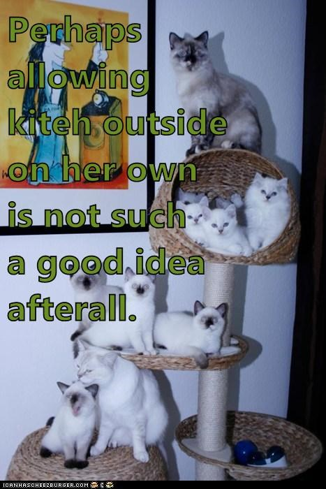 allowing,bad idea,cat,insinuation,outside,unsupervised