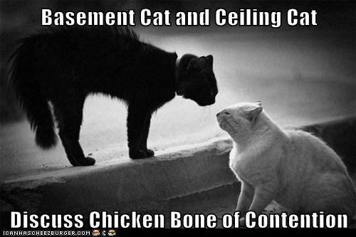 Basement Cat and Ceiling Cat  Discuss Chicken Bone of Contention