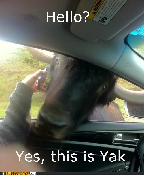 Hall of Fame,hello,hello this is dog,hello yes this is dog,yak