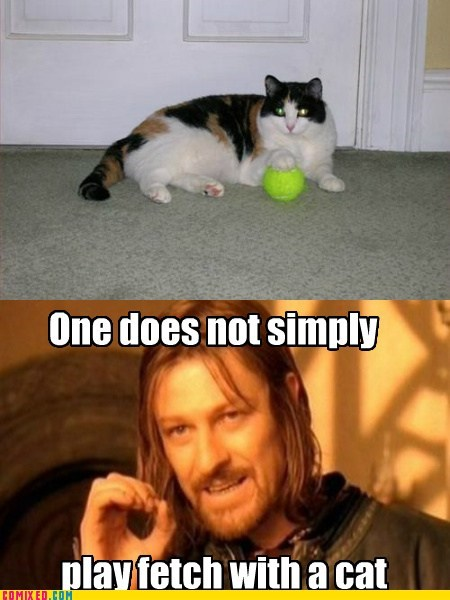 cat,fetch,From the Movies,one does not simply walk