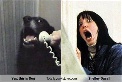 Yes, This is Dog Totally Looks Like Shelley Duvall