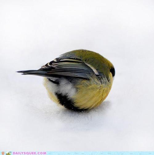 bird,black,little,round,yellow