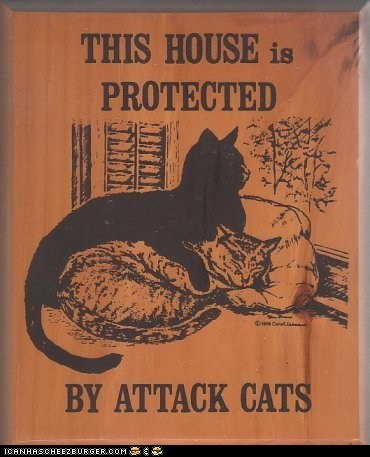 attack,Cats,house,protected,security,sign,warning