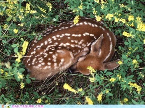 baby,deer,fawn,flowers,sleep,snuggle