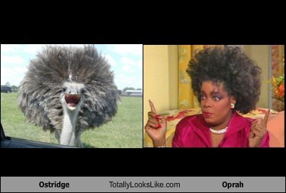 Ostrich Totally Looks Like Oprah