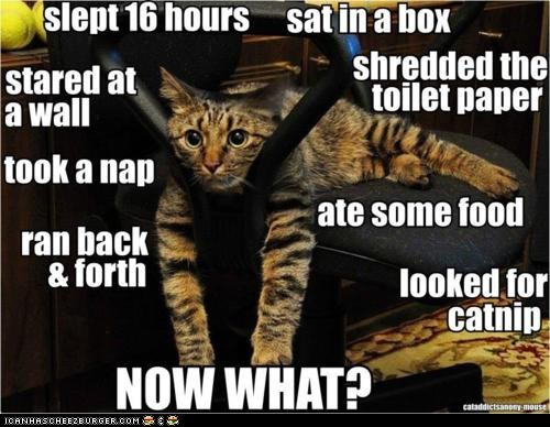 a day in the life,activities,add,bored,captioned,cat,mayhem,mischief