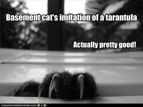 basement cat,claws,hand,imitations,paw,pretend,spider,tarantula