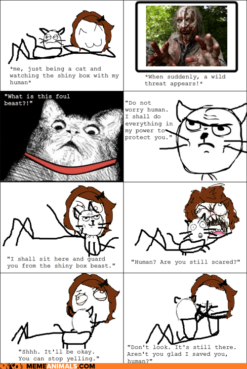 Animal Memes: Rage Comics - Kitteh Knows it's Not Appropriate for You