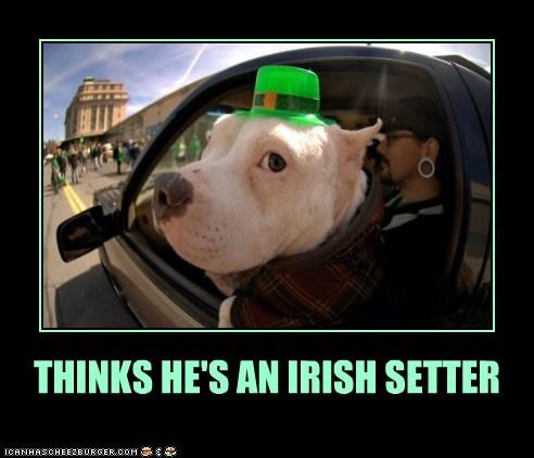 We All Irish Setturz on St. Paddy's Day!