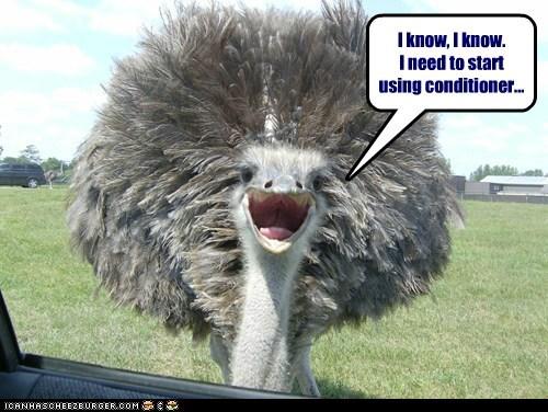 clean,conditioner,feathers,hair,hygiene,ostrich,shampoo