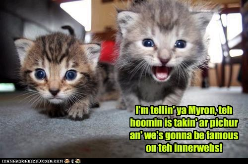 I'm tellin' ya Myron, teh hoomin is takin' ar pichur an' we's gonna be famous on teh innerwebs!