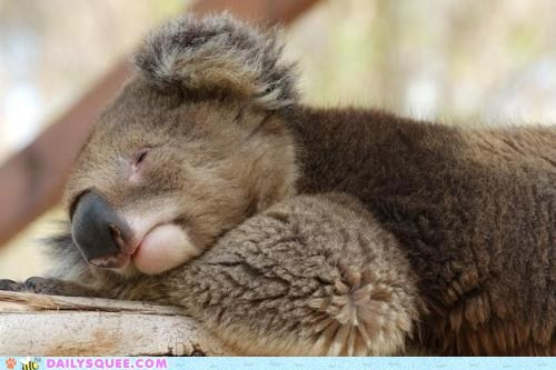 Squee Spree: Too. Much. Eucalyptus.