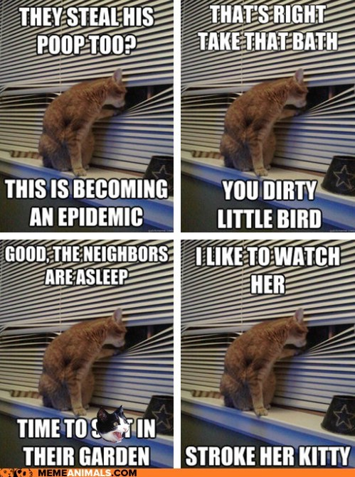 Animal Memes: Introducing Peeping Tomcat