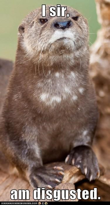 Animal Capshunz: Otterly Disgusted, I am
