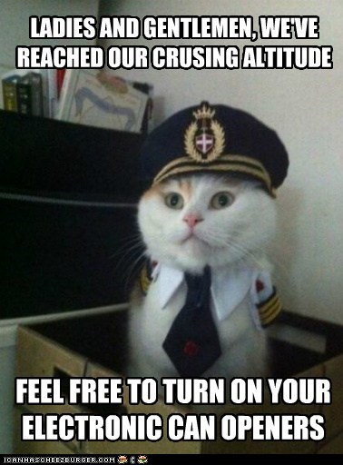 Animal Memes: Captain Kitteh - Bring All Gushy Food to the Flight Deck for Inspection